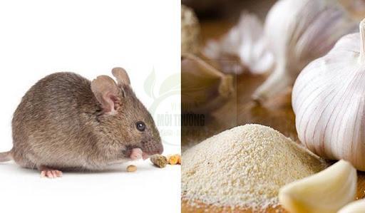 Đuổi chuột bằng tỏi